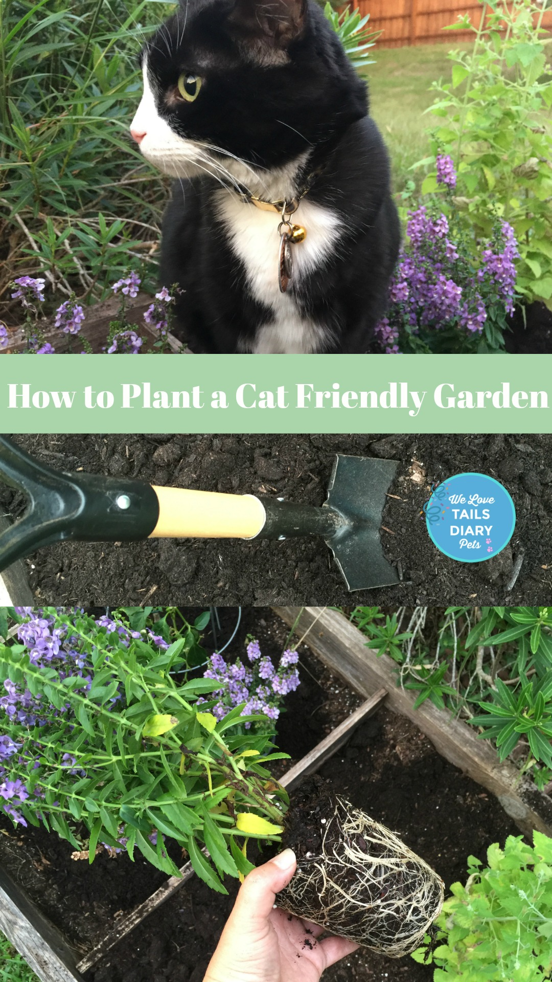 How to Plant and Cat Friendly Garden