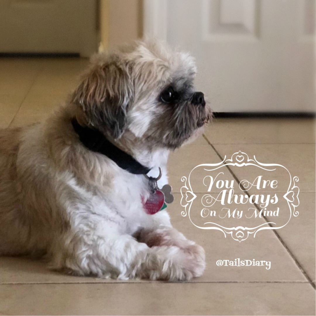 You are always on my mind pet parent planning